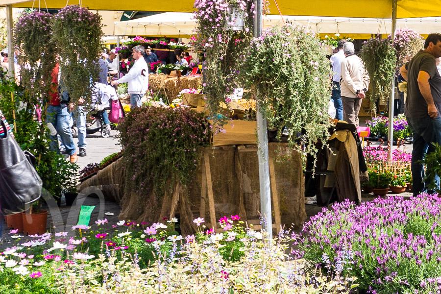 Der Blumenmarkt im Amphitheater in Lucca am 27. April, dem Fest der heiligen Zita