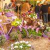 Heilige Zita - das Blumenfest auf dem Amphitheater in Lucca