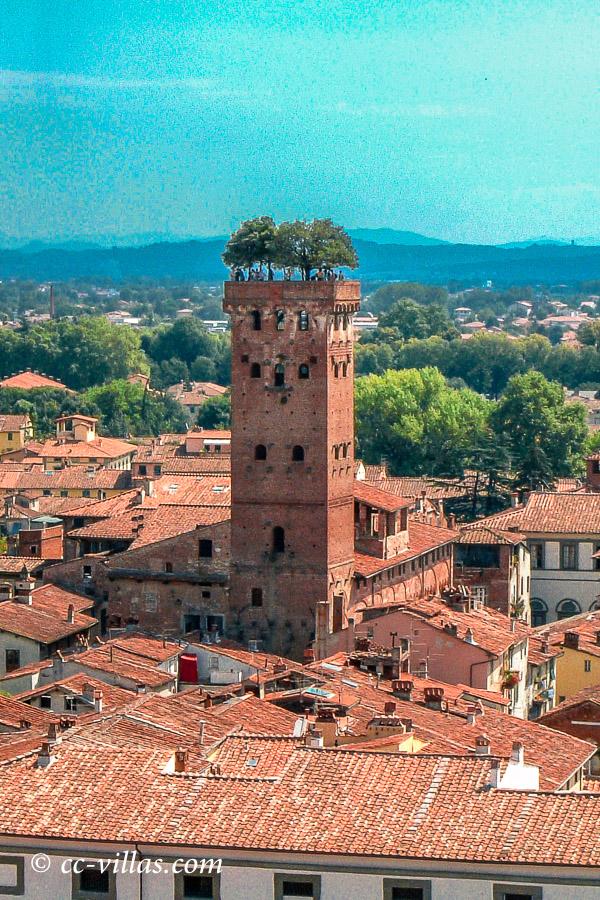 Lucca Toskana - die Steineichen oben auf dem Torre Guinigi