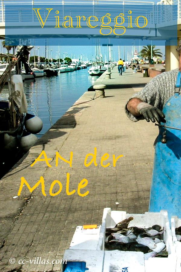 Viareggio Italien fangfrischer Fisch an der Mole