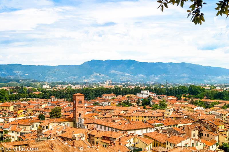 Blick vom Torre Guinigi auf die Stadt und Dächer