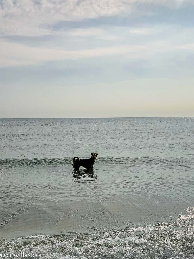 Dog at the sea and went with long leash in the water, just to make it correct