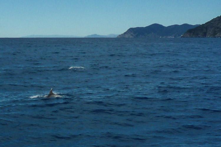 uns begleitete eine Schule von Delphinen